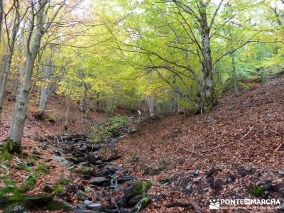 Hayedo de Tejera Negra [Serie Clásica];sendero del agua turismo senderismo